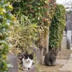 今週の365 DAYS OF TOKYO(3月31日~4月6日) ~ 谷中のネコ特集