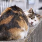 今週の365 DAYS OF TOKYO(4月7日~4月13日) ~ 夕やけだんだんのネコ特集
