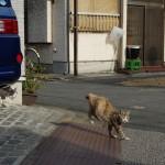 墨田区東向島の路地裏でもっふもふの巨大なネコなどのたくさんのネコたちに出会った! PENTAX K-3で下町撮影散歩 その4