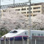 【Tokyo Train Story】桜満開、東北新幹線沿線風景