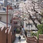 【東京春景色】日暮里の養福寺で3種類の桜が咲く風景 春のお花見フォトウォーク2014 その2