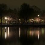 東京都足立区の舎人公園で開催された「春の花火と千本桜まつり」 春の花火をたっぷりと撮影してきた!
