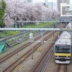【Tokyo Train Story】黄色い帯の電車と桜並木(総武線)