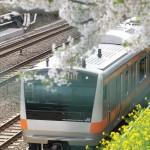 【Tokyo Train Story】桜と菜の花が咲く春景色(中央線)