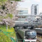 【Tokyo Train Story】中央線東中野駅付近の桜と菜の花が咲く風景