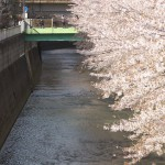 【Tokyo Train Story】神田川沿いの桜を駆け抜ける総武線