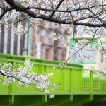 【Tokyo Train Story】神田川桜景色(都電荒川線)