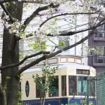【Tokyo Train Story】桜と都電荒川線レトロ風車両