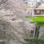 【Tokyo Train Story】桜に囲まれた高戸橋を渡る都電荒川線