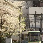 【Tokyo Train Story】西陽が当たる都電荒川線と桜がある景色