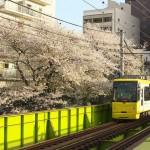 【Tokyo Train Story】都電荒川線沿線の桜の名所 高戸橋