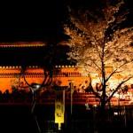 【東京春景色】上野公園の夜桜をNikon D7000で動画撮影してみた!