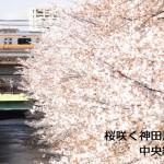 【東京春景色】桜咲く神田川を越える中央線・総武線を動画撮影してみた!桜吹雪の中を走る列車がかっこよかった!