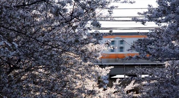 桜咲く神田川を越える中央線・総武線 crossing the Kandagawa River being cherry blossoms in bloom