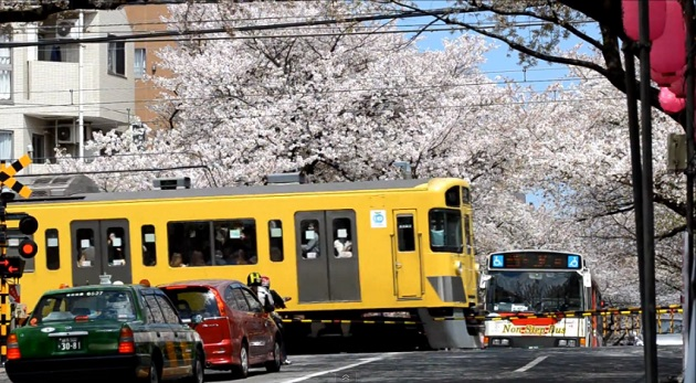 【東京春景色】西武新宿線の黄色い電車が新井薬師前付近の中野通りの桜並木を通り抜ける様子をNikon D7000で動画撮影してみた!