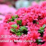 根津神社の文京つつじまつりで満開のつつじを動画撮影してみた!