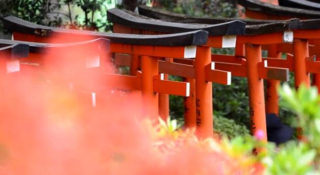 根津神社 文京つつじまつり