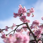 今週の365 DAYS OF TOKYO(4月28日~5月4日) ~ 春を迎えた上野と谷中の路地裏風景