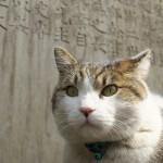 今週の365 DAYS OF TOKYO(5月19日~5月25日) ~ 谷中と荒川のネコたち