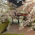 弘前城と桜のトンネルのライトアップは必見!弘前さくらまつりの夜桜見物 『弘前の桜を見に行こう!』 その10