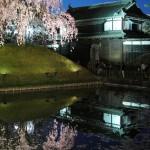 ブルーモーメントの蒼い空は弘前城外濠のライトアップされた花筏を幻想的な姿に変える 『弘前の桜を見に行こう!』 その9