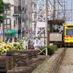 【Tokyo Train Story】黄色いバラと黄色い都電あかおび号