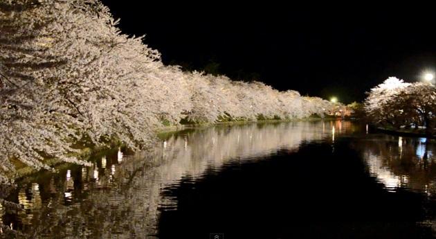 弘前さくらまつり 夜のお花見散歩 Hirosaki cherry blossoms festival