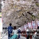 弘前の桜は散り始めると桜吹雪と花筏というこれまた美しい桜の景色になるのをNikon D7000で動画撮影してみた!