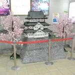 弘前駅で臨時寝台特急あけぼのの動画撮影をしてみた! 『弘前の桜を見に行こう!』 その20