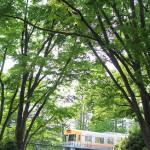 【Tokyo Train Story】新緑の井の頭公園(京王井の頭線)