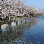弘前公園の外濠の水面に映る青空と桜の風景 『弘前の桜を見に行こう!』 その7