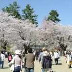 弘前城と岩木山は桜がある景色こそふさわしい! 『弘前の桜を見に行こう!』 その5