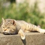 今週の365 DAYS OF TOKYO(5月26日~6月1日) ~ 春の谷中のネコたちはみんな眠そうです