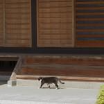 今週の365 DAYS OF TOKYO(6月2日~6月8日) ~ 谷中と上野桜木のネコたち