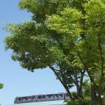 【Tokyo Train Story】ゆりかもめ沿線の新緑風景