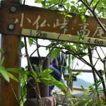 城山山頂で食べたかき氷とネコとの出会い『新緑の陣場山から高尾山への縦走』 その4