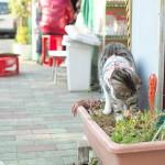 佃の駄菓子屋さんで元気に働く看板猫 『佃・月島・築地路地裏散歩』 その5