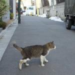 高円寺の路地裏で出会ったネコたち 『高円寺路地裏散歩』 その3(最終回)