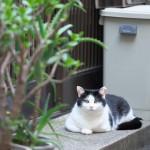 今週の365 DAYS OF TOKYO(7月7日~7月13日) ~ 梅雨の谷中のアジサイとネコのいる風景