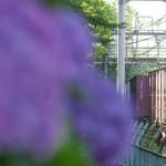 【Tokyo Train Story】飛鳥の小径のアジサイを横目に走る貨物列車