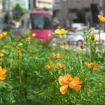 【Tokyo Train Story】線路脇の小さな花(都電荒川線)