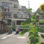 【Tokyo Train Story】夏が来た!(都電荒川線)