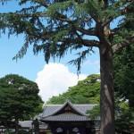 今週の365 DAYS OF TOKYO(7月28日~8月3日) ~ 夏を迎えた上野と西日暮里