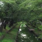 川越の東明寺で出会った双子の子猫を撮影する 『真夏の川越散策』 その6