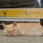 銚子電鉄君ヶ浜駅で暮らすネコのきみちゃんに会ってきた!『夏の青春18きっぷの旅 銚子路地裏散歩編』 その10