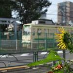 【Tokyo Train Story】ある暑い夏の日(都電荒川線)