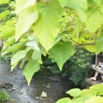 源兵衛川の水上遊歩道を歩くのが最高に気持ちがよかった! 『夏の青春18きっぷの旅 三島路地裏散歩編』 その6