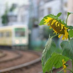 【Tokyo Train Story】夏の名残(都電荒川線)