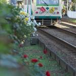 【Tokyo Train Story】日影のバラ(都電荒川線)