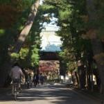 世田谷区にある豪徳寺の山門付近の紅葉があまりもみごとだった 『豪徳寺の紅葉2014』 その1